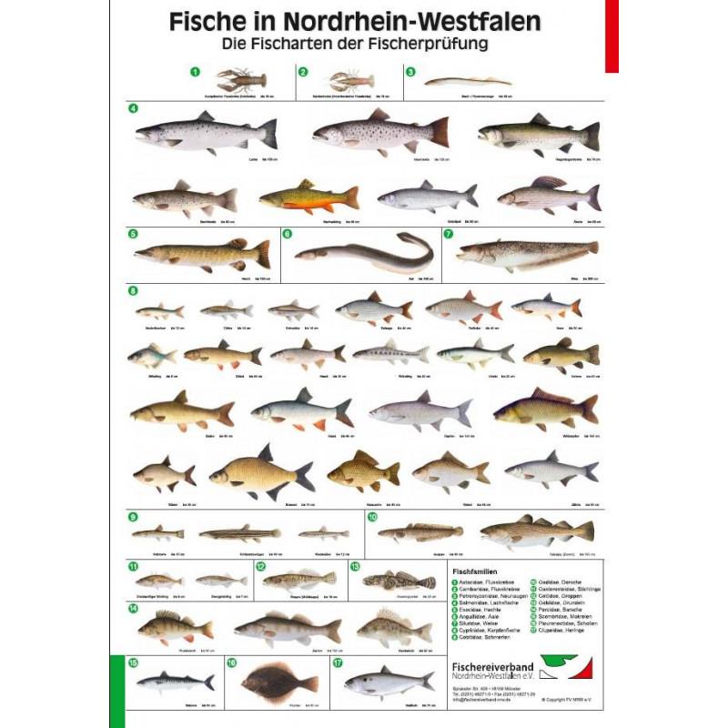 Poster Fischarten NRW, laminiert